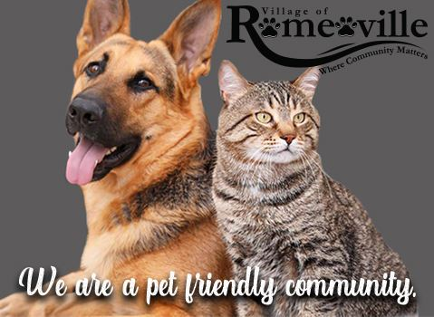 GSD n Cat image for Pet homepage
